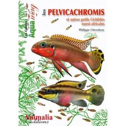Les pelvicachromis et autres petits cichlidés ouest-africains