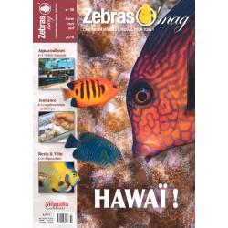 ZebrasO'mag N°36