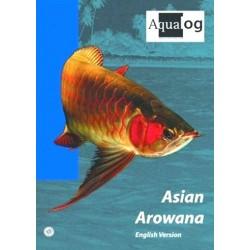 Asian Arowana