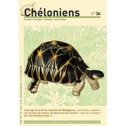 Chéloniens N°36
