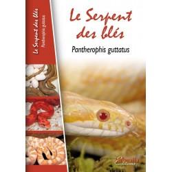 Le Serpent des Blés - Pantherophis guttatus