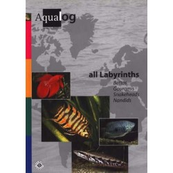 Aqualog All Labyrinths