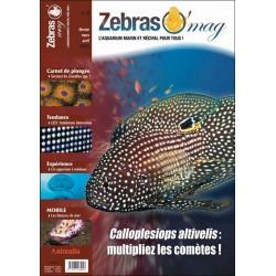 ZebrasO'mag N°8