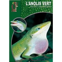 L'Anolis Vert - Anolis carolinensis