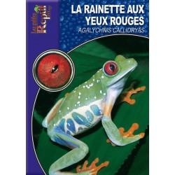 La Rainette aux Yeux Rouges - Agalychnis callidryas
