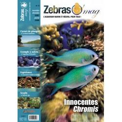 ZebrasO'mag N°3
