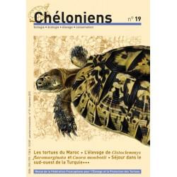 Chéloniens N°19