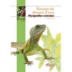 Elevage du dragon d'eau - Physignathus cocincinus