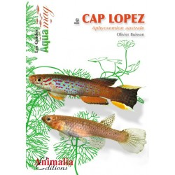 Le Cap Lopez et autres Aphyosemions