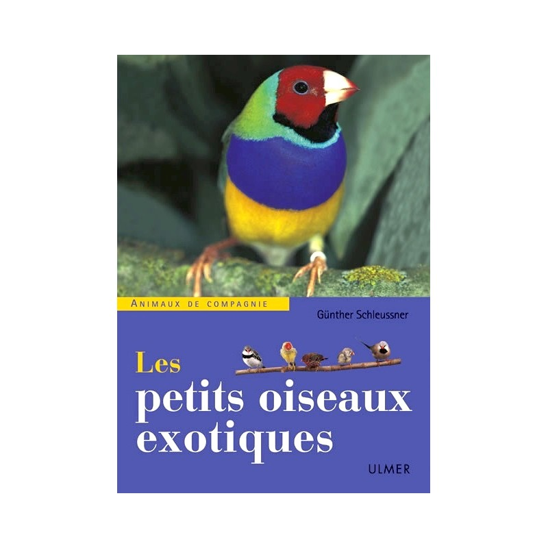 Oiseaux exotiques video les petits oiseaux exotiques for Les petits oiseaux