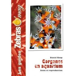 Gorgones en aquarium
