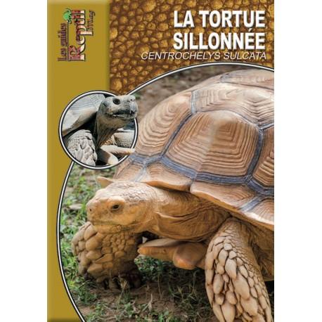 La tortue sillonnée - Centrochelys sulcata