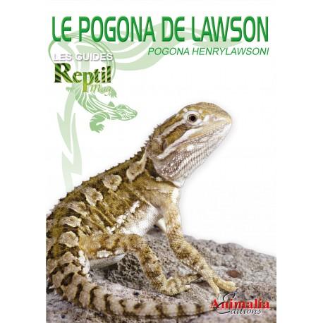 L'Agame de Lawson - Pogona henrylawsoni