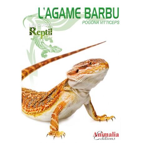 L'Agame Barbu - Pogona vitticeps