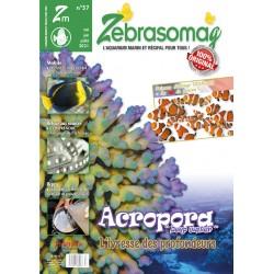 Zebrasomag N°57