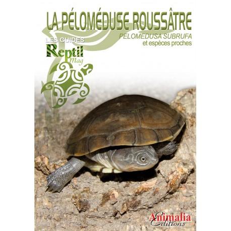 La péloméduse roussâtre – Pelomedusa subrufa et espèces proches