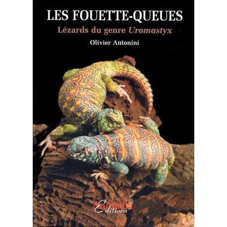 Les Fouette-queues - Lézards du genre Uromastyx
