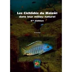 Les Cichlidés du Malawi en milieu naturel