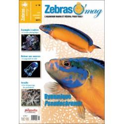 ZebrasO'mag N°18