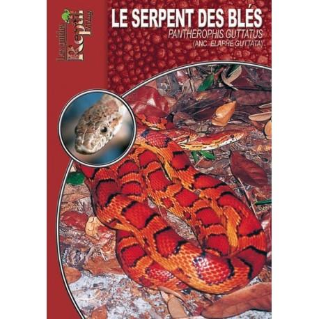 Serpent des blés - Pantherophis guttatus