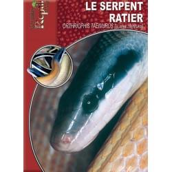 Le Serpent-Ratier - Orthiophis taeniurus