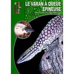Le Varan à Queue Epineuse - Varanus acanthurus