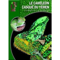 Le Caméléon Casqué du yémen - Chamaeleo calyptratus