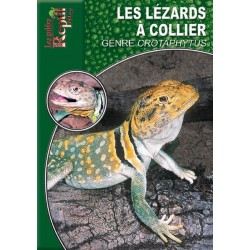 Le Lézard à Collier - Crotaphytus collaris