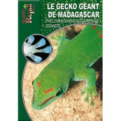 Le Gecko Géant de Madagascar - Phelsuma madagascariensis grandis