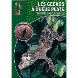 Les Geckos à Queue Plate - Genre Uroplatus