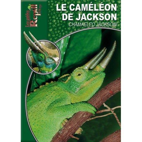Le Caméléon de Jackson - Chamaeleo jacksoni