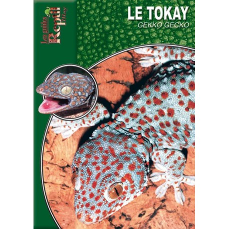 Le Tokay - Gekko gecko